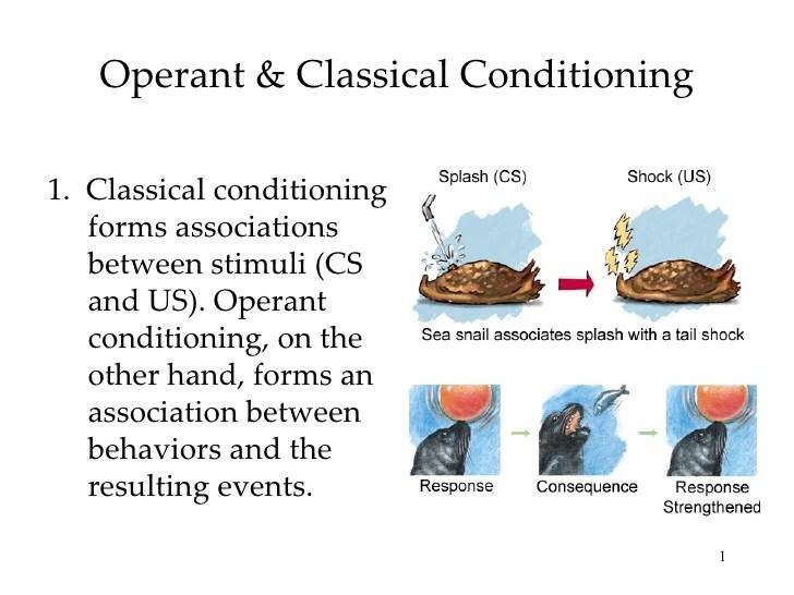 Operant Conditioning Essay Operant Conditioning Essay Operant