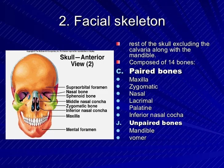 Osteology of head and face