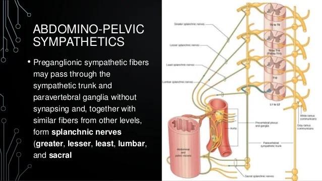And Sacral Pelvic Splanchnic Nerves