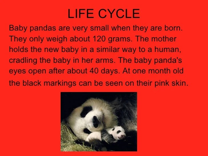 panda life cycle diagram hanma atv schematics pandas