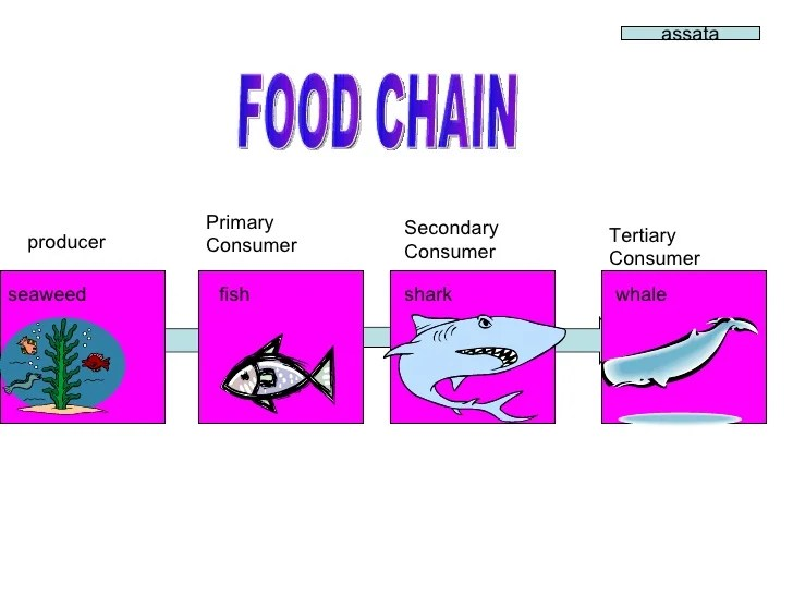 wolf food chain diagram 98 honda civic ignition wiring parker