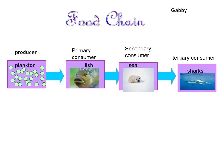 great white shark food chain diagram fender squier strat wiring tiger | foodfash.co