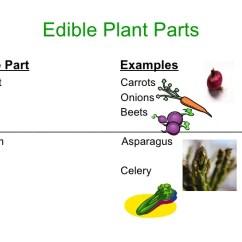 Sofa Parts Names Quality Of Cb2 Sofas All Worksheets » Edible Plants ...