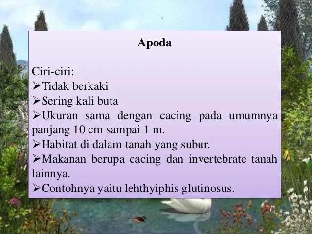 Amfibi
