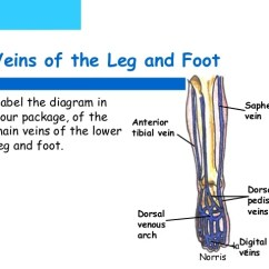 Veins In The Foot Diagram Stress Strain For Steel Pedicure Blood Supply 7