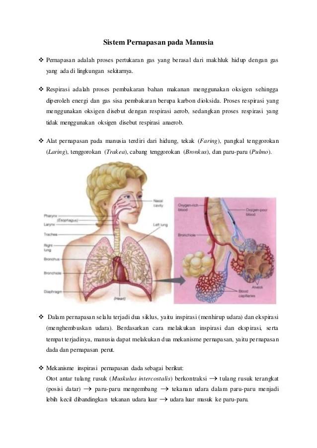 Mekanisme Sistem Pernapasan : mekanisme, sistem, pernapasan, Anatomi, Fisiologi, Manusia