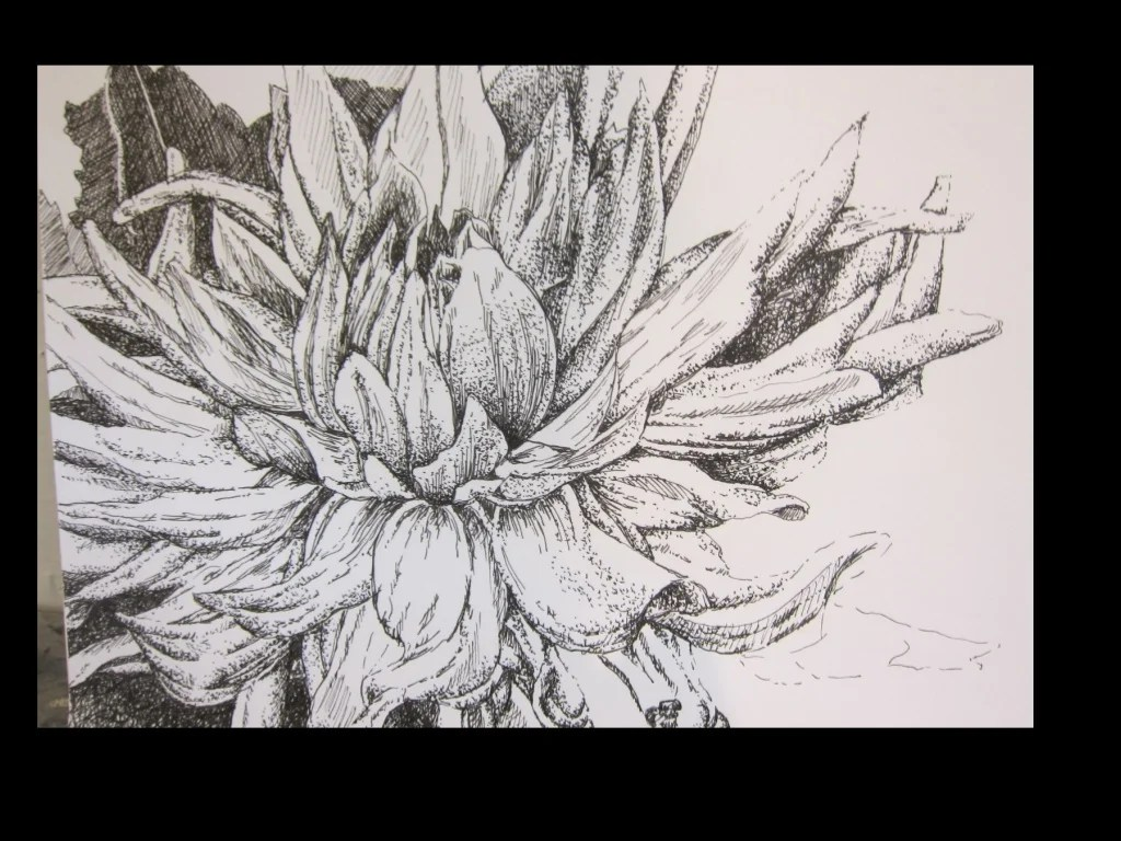Drawing With Ink Variety Of Line And Cross Hatching Pen