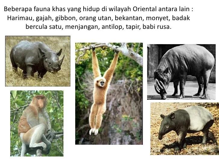 Persebaran fauna di ASIA