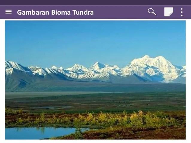Gambar Persebaran Flora Fauna Dunia 5 Gambar Tundra di