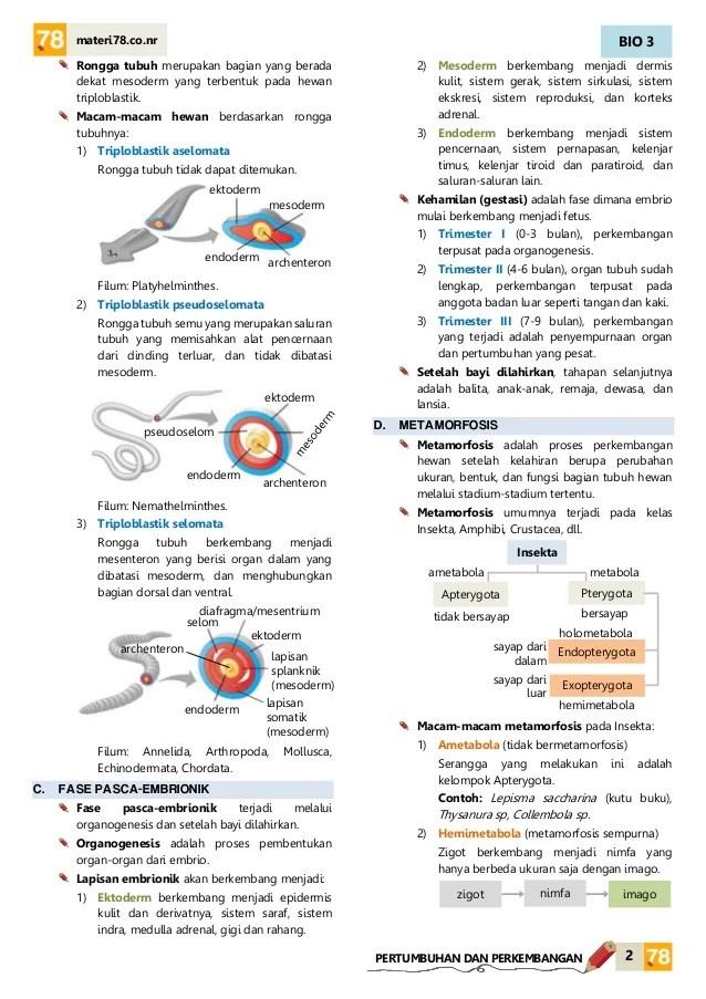 Materi Pertumbuhan Dan Perkembangan Kelas 12 : materi, pertumbuhan, perkembangan, kelas, MATERI, Pertumbuhan, Perkembangan, Hewan, KELAS