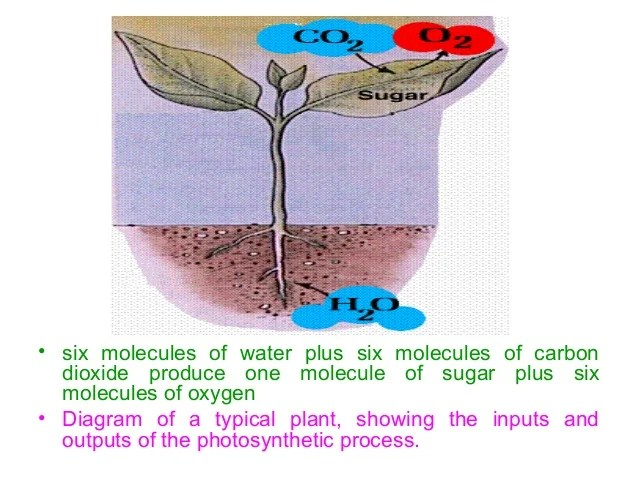 diagram with inputs and outputs of photosynthesis process baldor motor wiring 3 phase