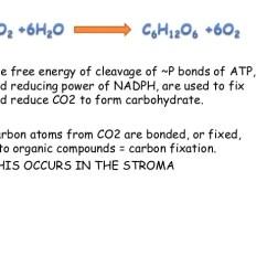 Photosynthesis Z Scheme Diagram Virago 125 Wiring