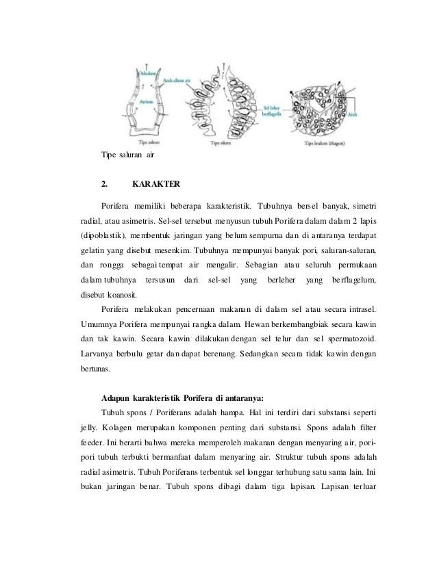 Saluran Air Pada Porifera : saluran, porifera, Phylum, Porifera