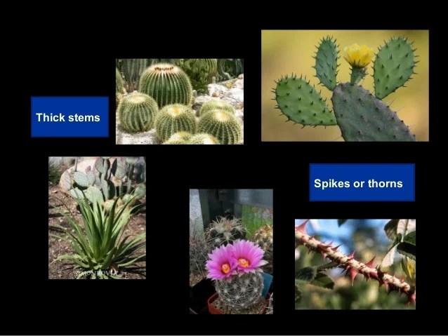 Near Plants Water Grow