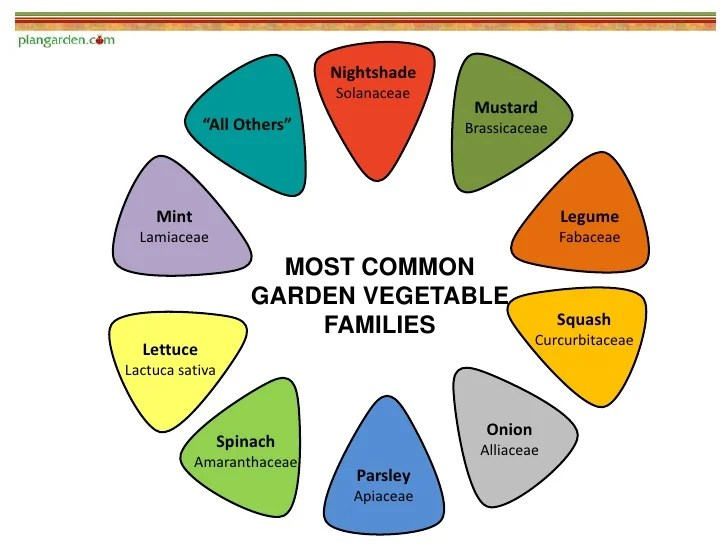 Most common garden vegetable families also plant to understand companion planting rh slideshare