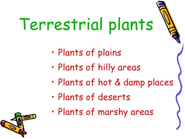 plant cell diagram black and white single pole dimmer switch wiring uk terrestrial plants examples with name