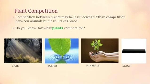 Plant Succession & Competition