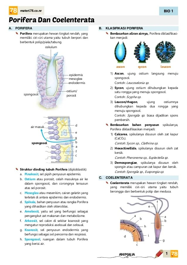Struktur Tubuh Coelenterata : struktur, tubuh, coelenterata, MATERI, Polifera, Coelenterata, KELAS