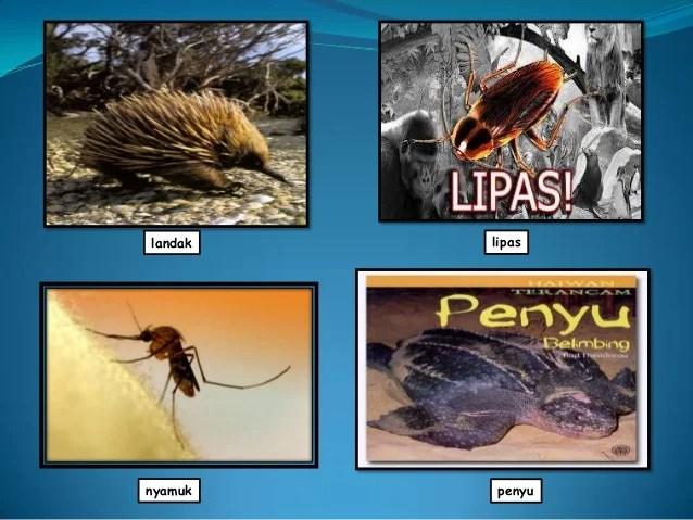 Power point kamus bergambar haiwan