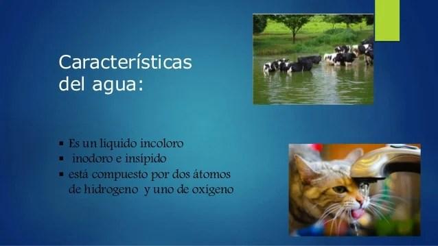 importancia del agua en animales de granja
