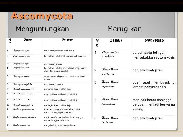 presentasi fungi kelas X