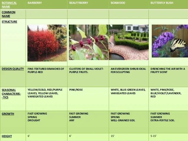 Landscape Types Plants Tree Shrubs