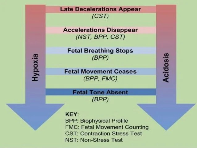Fetal Movement 10 Weeks