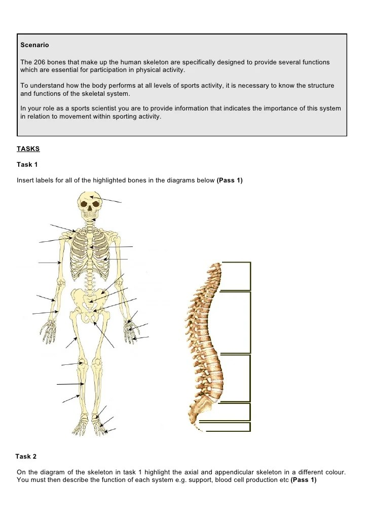 skeleton diagram with labels 3 way fan light switch wiring principles of a+p in sport 1112 ass 1 skeletal system