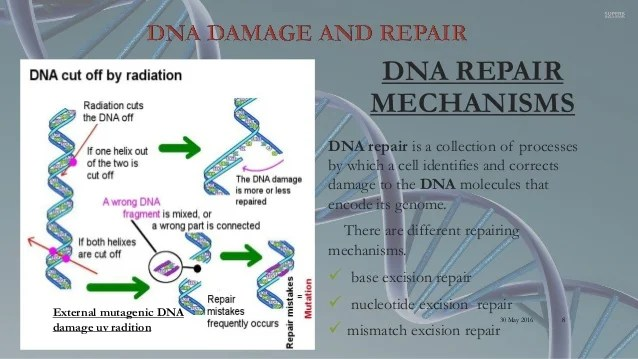 DNA repair and regulation of gene expression in ...