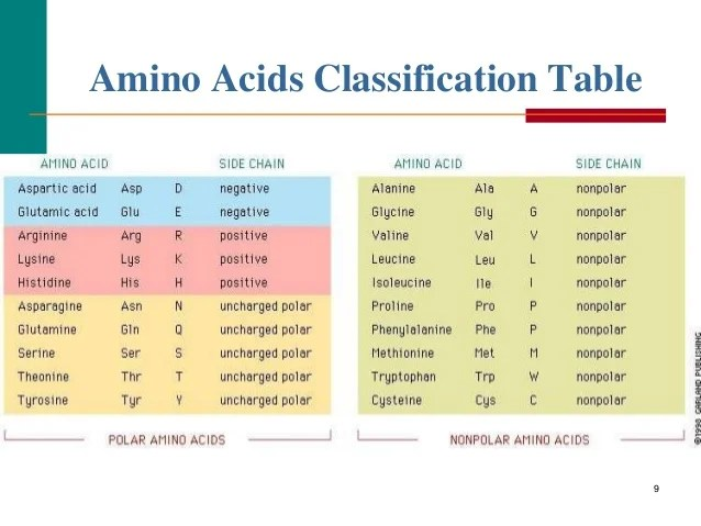 amino acids classification table also and proteins denaturation of rh slideshare
