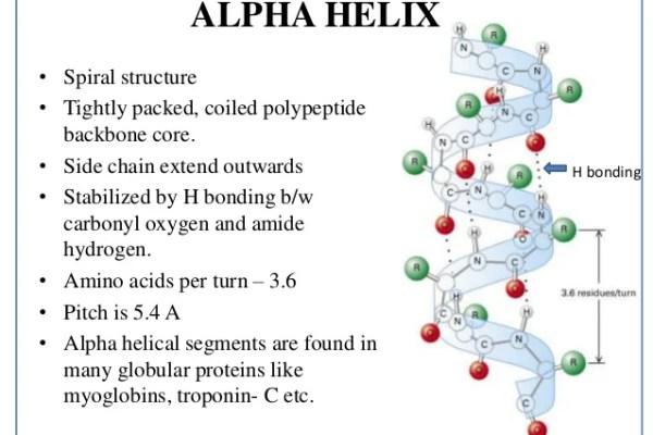 Alpha Helix