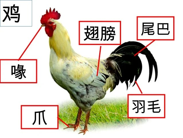 動物身體部分