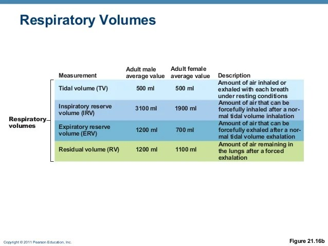 Respiratory phys online