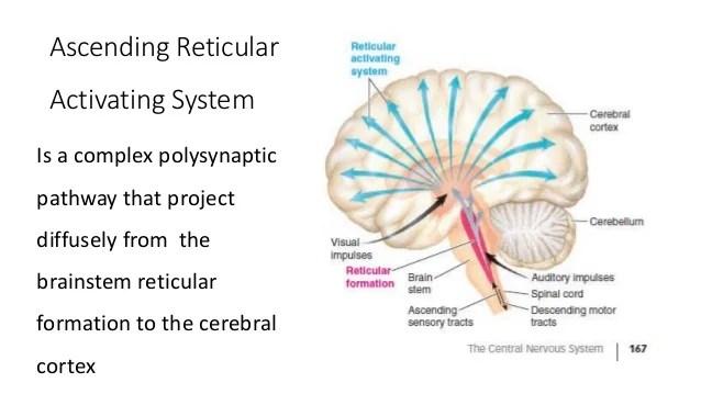 reticular formation diagram mercury outboard wiring schematic 23