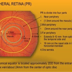 Human Eye Diagram Blind Spot Ipf Wiring Toyskids Co Retina And Layers Color