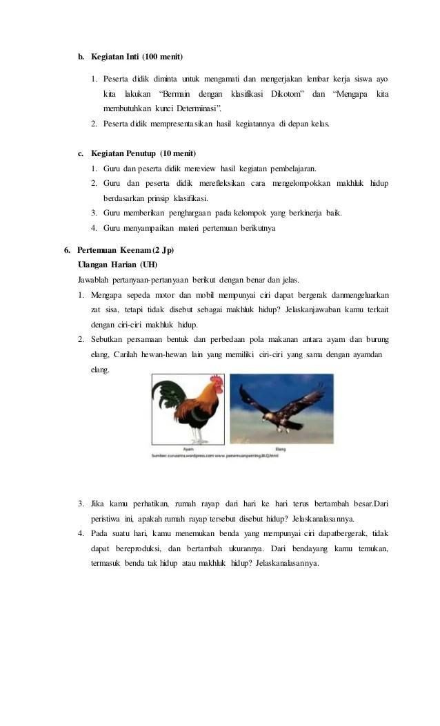 Sebutkan Persamaan Bentuk Dan Perbedaan Pola Makan Antara Ayam Dan Burung Elang : sebutkan, persamaan, bentuk, perbedaan, makan, antara, burung, elang, Gambar, Rajawali