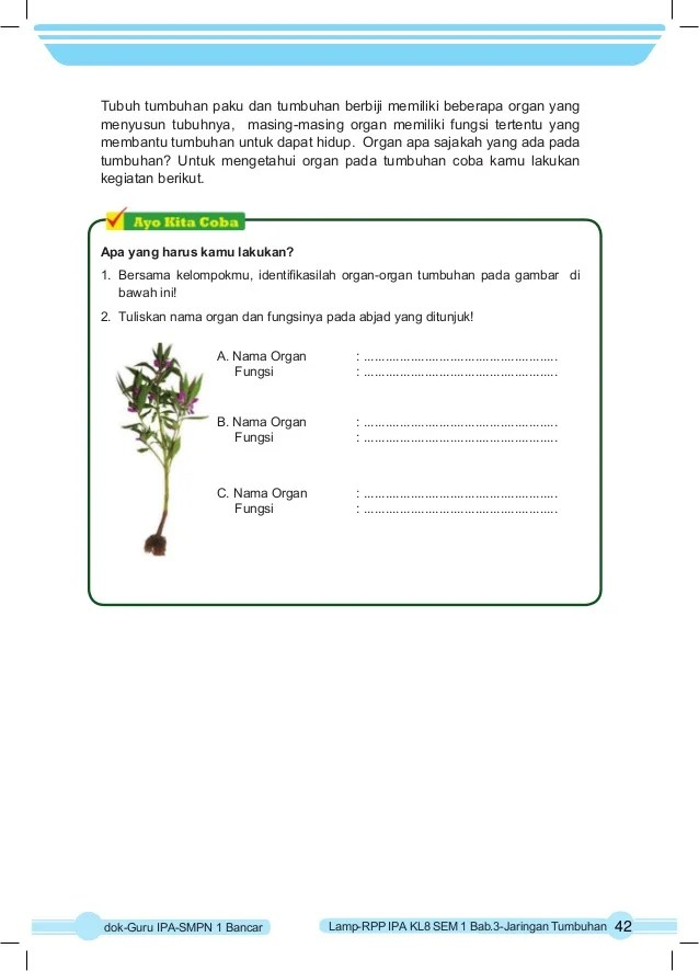 Aktivitas 3.1 Mengidentifikasi Organ Penyusun Tumbuhan Beserta Fungsinya : aktivitas, mengidentifikasi, organ, penyusun, tumbuhan, beserta, fungsinya, KELAS, SEMESTER-1, Taringan, Tumbuhan