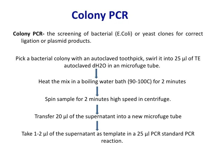 Digestion Problems Colony Pcr