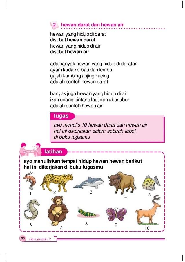 Hewan Yang Hidup Di Air Disebut : hewan, hidup, disebut, Hewan, Hidup, Darat, Disebut, Sebutkan