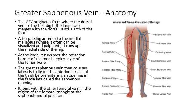 Saphenous Vein Diagram - Illustration Of Wiring Diagram •