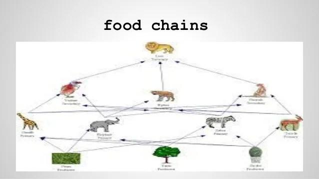 savanna animal food chain diagram bmw can bus wiring grassland www picswe com related keywords suggestions jpg 638x359