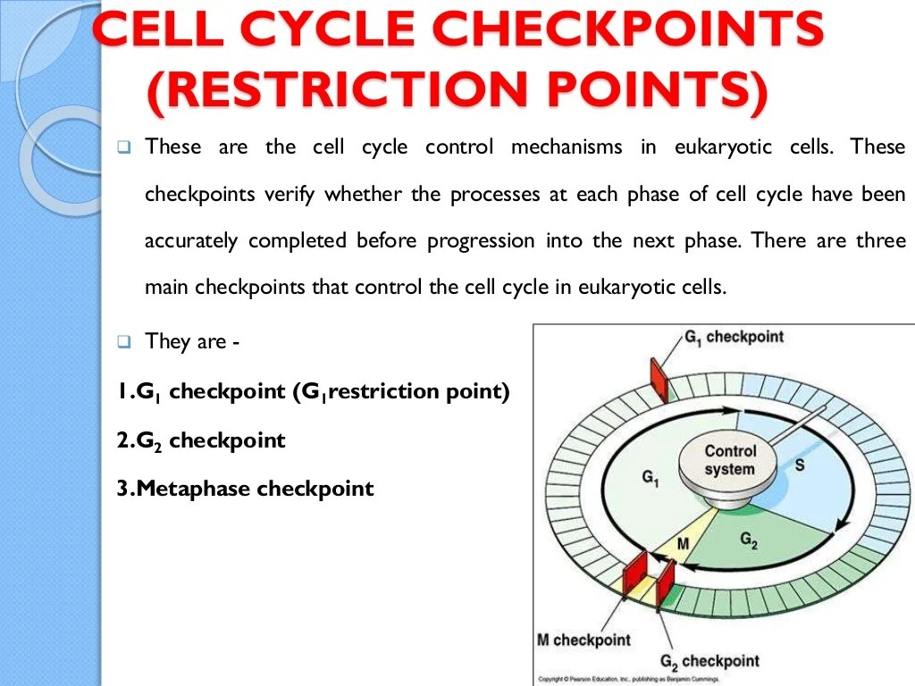 Cell Cycle And Its Check Points And Regulation