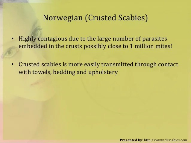 How To Kill Scabies All Think To Know