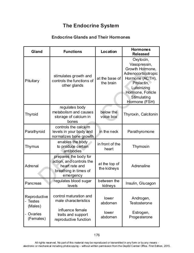 Printables. The Human Endocrine System Worksheet