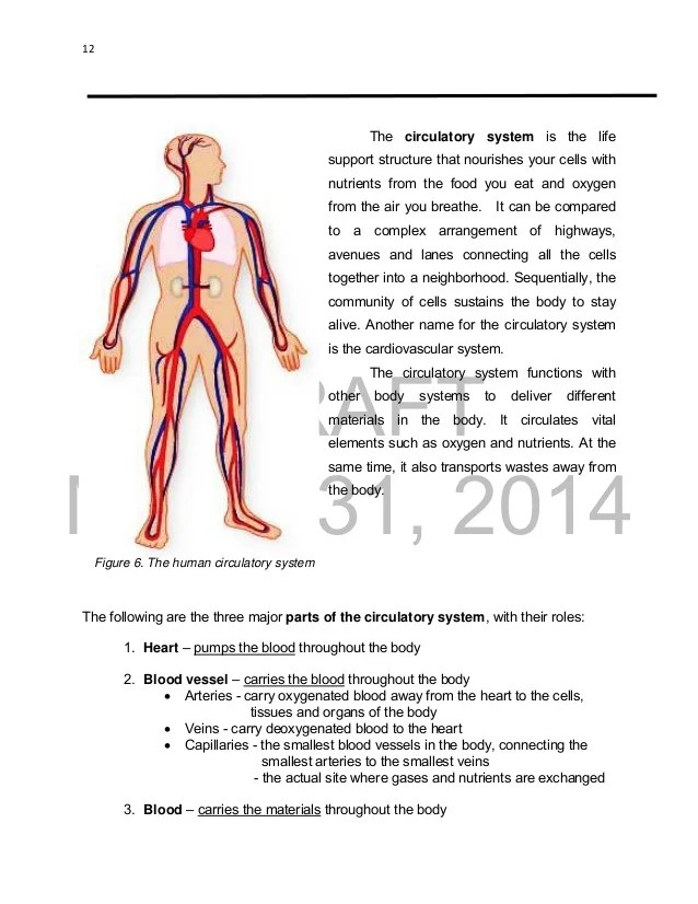 Circulatory System 2 Essay College Paper Service
