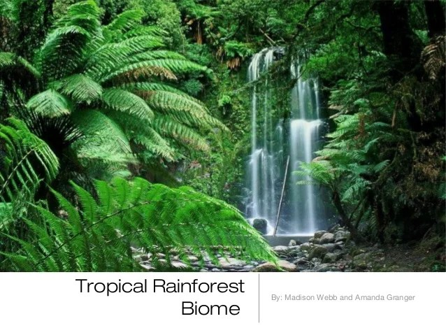 The tropical rain forest has two seasons: Rainforest Biome