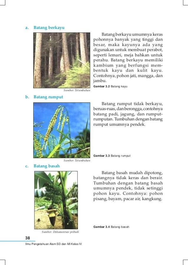 Tabel Perbedaan Tumbuhan Lumut Dan Paku - PDF Free Download