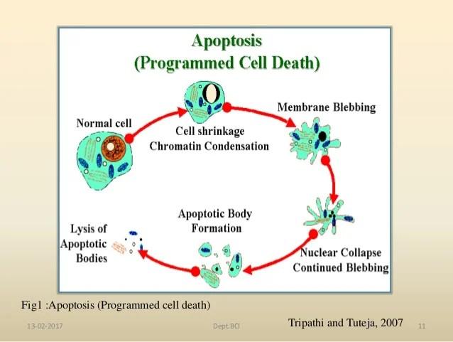 Non Enzymatic Glycosylation