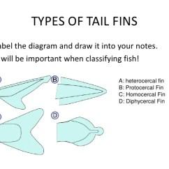 Ray And Skate Diagram Integumentary System Skin Unlabeled Fish Wiring Schematics Diagrams Scematic Rh 25 Jessicadonath De Perch Barracuda