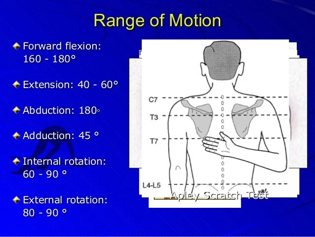 Posterior deltoid manual muscle test